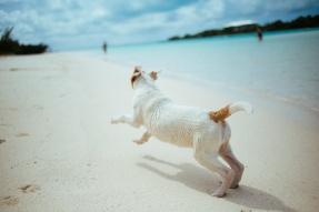 dog (2)